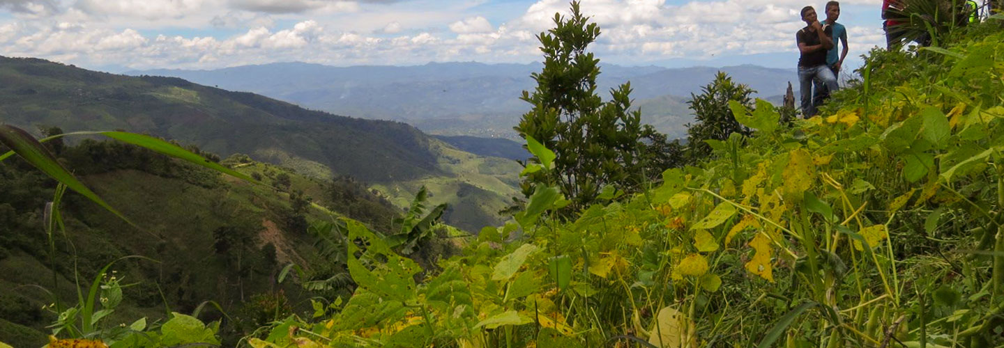 Youth in Honduras working together as farmer-researchers. Here, two young people stand on a steep slope. Bean are growing in the foreground. In the background, there are mountains and a cloudy sky.