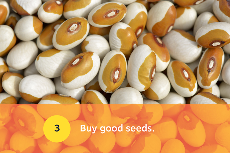 Five food resolutions for 2021, resolution 3: Buy good seeds. Image of duo toned (white and caramel) bean seeds.