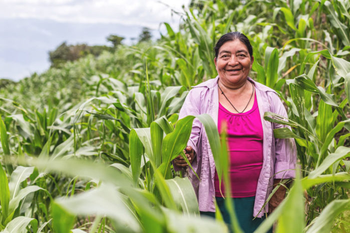 Support COVID-19 recovery for farmers like Isidora. A woman stands on a very sloped field of maize. She smiles at the camera.