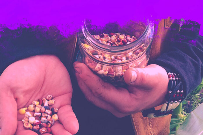 Support the COVID-19 Indigenous Seed Crisis Response Circle: a person's torso and hands are framed. One hand holds multicolour corn kernels, and the other hand holds a jar of many more of the same kernels. One wrist wears a beaded bracelet.