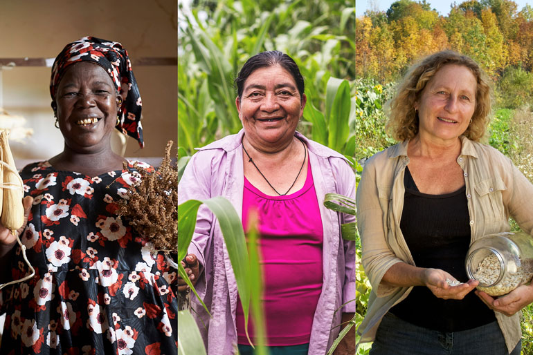 These seed savers are keeping biodiversity alive: three images of three women. The first photo on the left is a smiling woman with a patterned dress and hair scarf. She holds a dry corn cob in one hand and a dry grain in the other. The second photo is a smiling woman wearing a collared shirt and a necklace. She stands in a field of corn with one hand lightly gripping an ear of corn. The third photo is a woman smiling. She wears a collared shirt and holds a large jar of seeds under her arm and has tipped some of the seeds from it into her other hand.