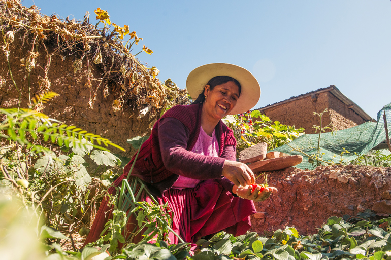 Farmers in Bolivia bring water to the mountains. This photo shows a farmer crouching in her field, smiling and holding small berries in her hand. The sky is clear of clouds. There is a stone wall behind her.