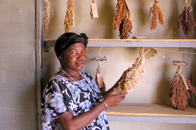 Aissata is a seed saver in Mali. Here she holds the head of a dry sorghum stock that is hanging from a tall shelf next to her. There are many other types and colours of sorghum hanging on the shelves.
