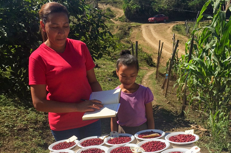 This farm survived two hurricanes using agroecology. This photo shows a woman with a notebook looking at a dozen bowls full of red bean seeds. A young kid stands next to her looking at the seeds too.