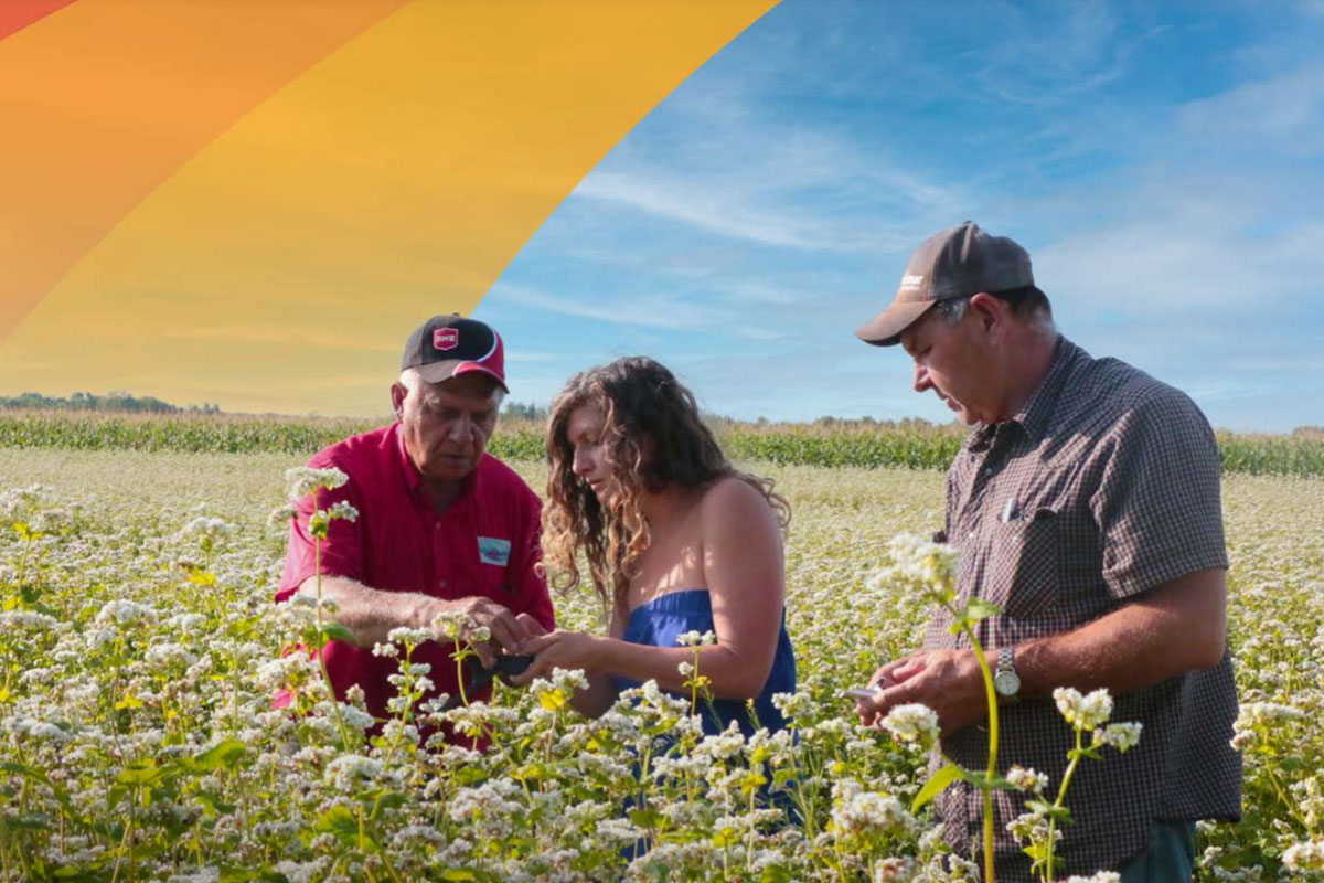photo of three people standing in a field of waist-high crops.