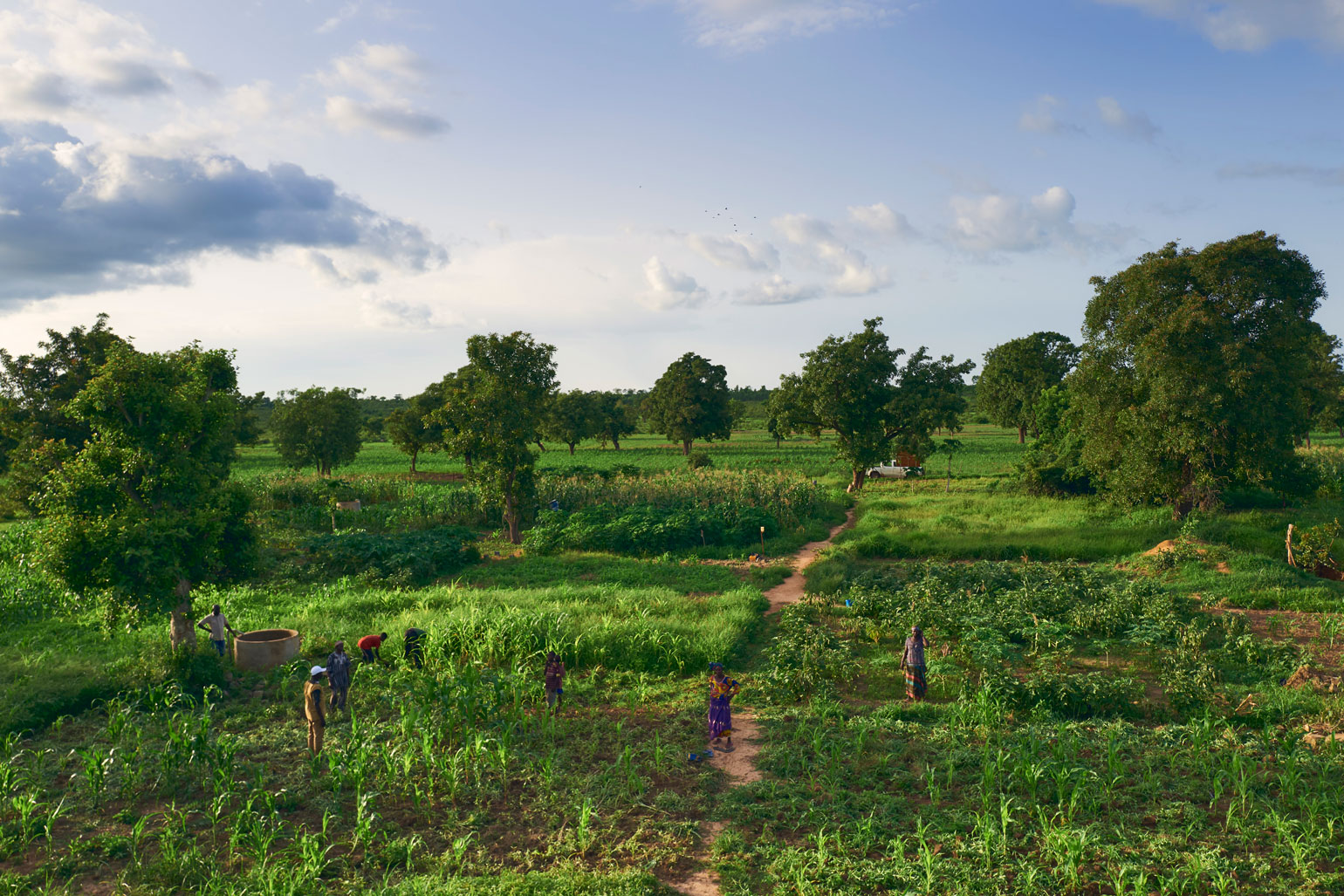 UN Food Systems Summit 2021 - Landscape photo of a lush farm field. There are loose groups of crops like corn and eggplant, dotted with trees and farmers. There is a concrete well in the field.