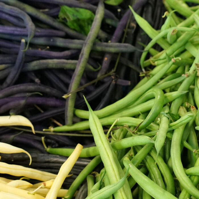 Learn how to plant, grow and save bean seeds - Photo of fresh beans of three different colours, piled.