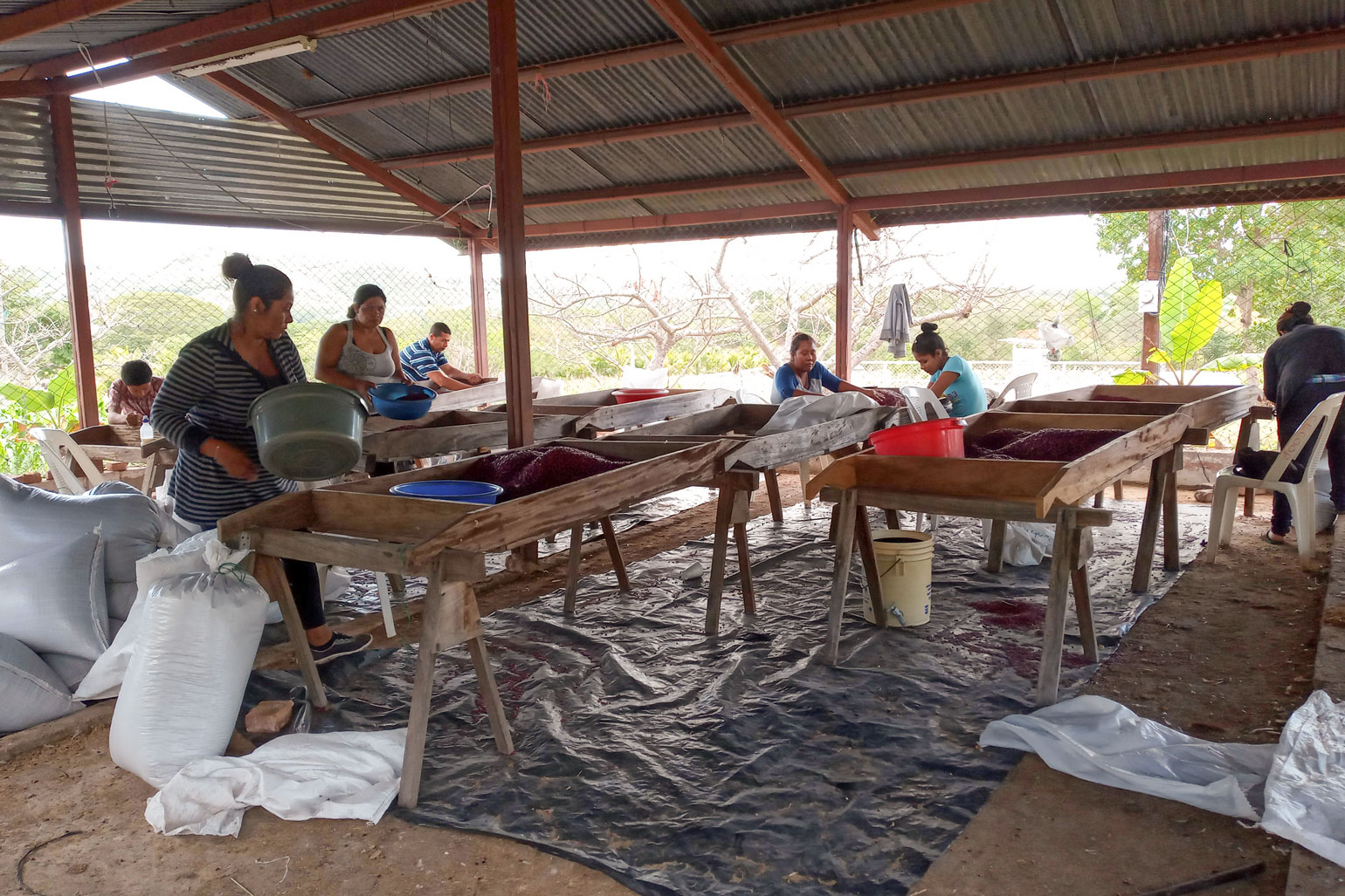 Rural to urban connection is building food sovereignty in Nicaragua - Tables are set up in an open sided building. The tables have piles of red beans on them. Seven people are hunched over various tables and going through the beans.